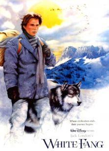 雪地黄金犬